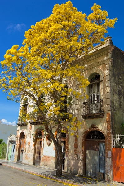 Brad Braker Puerto Rico Cityscapes